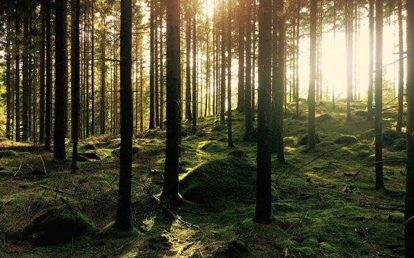 KOSMAJ – poznata ali nedokučiva planina