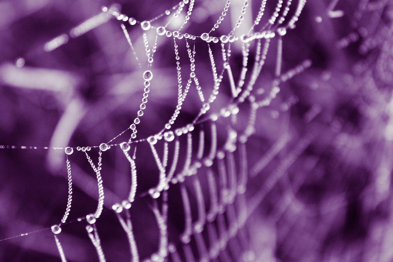 paukove niti