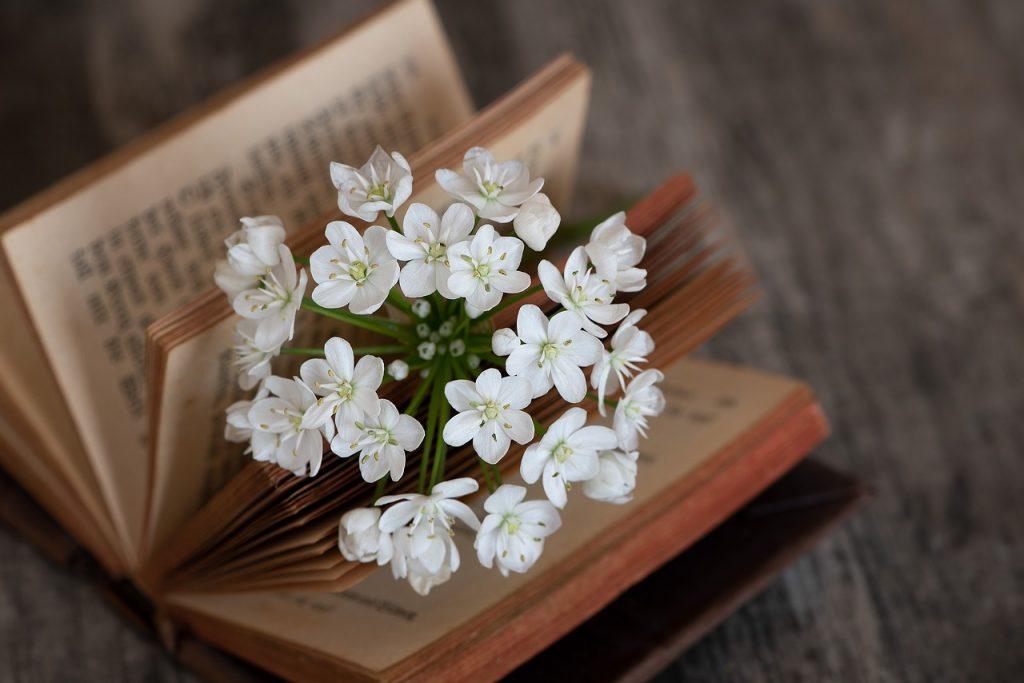 Knjiga i cvet